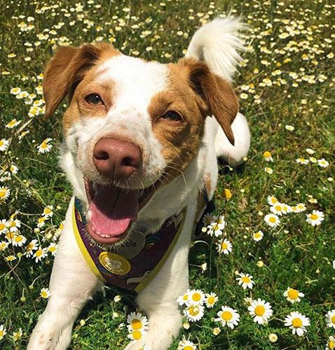 foto de perro feliz para diseño de tatuajes